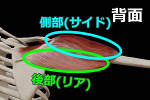肩の側部と後部